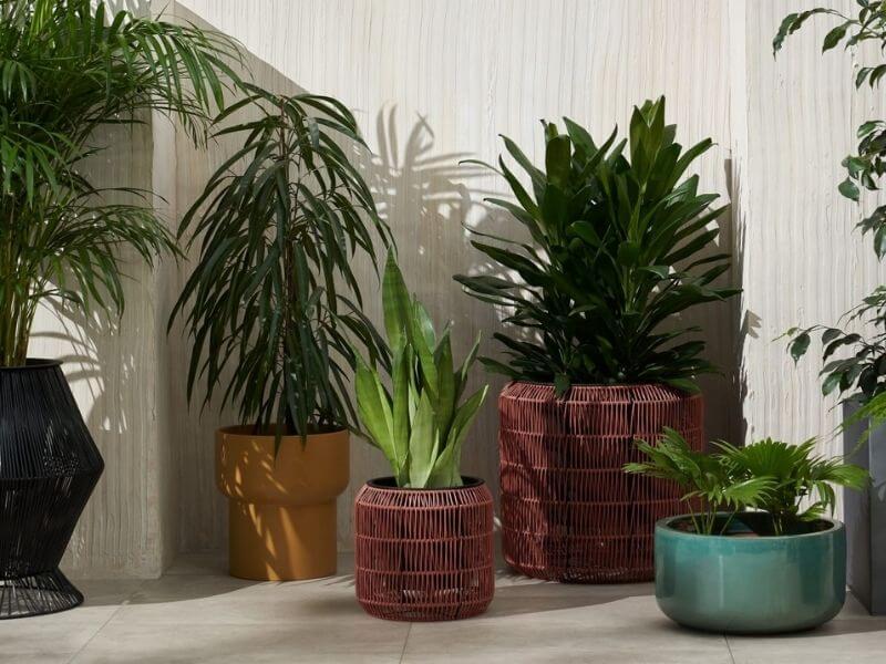 Round Plant Stands